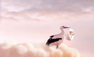 naissance cigogne